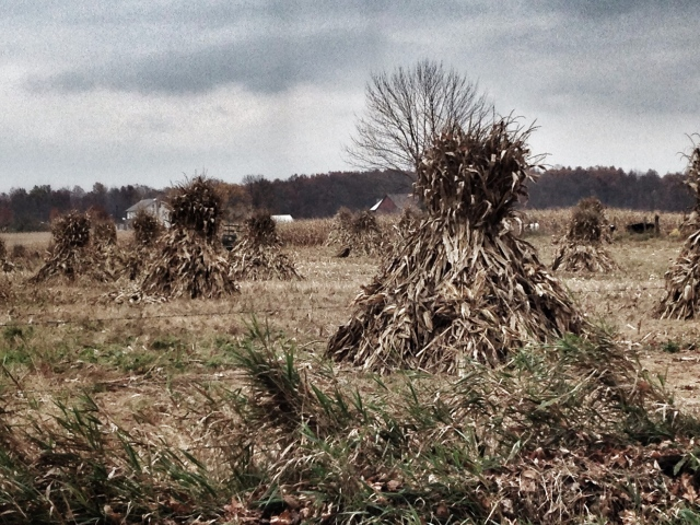 Corn stacks. Berlin, Ohio.