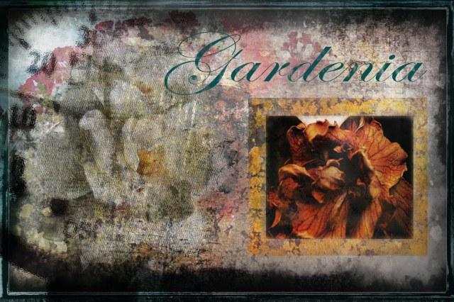 Gardenia -ChallengeWeek4